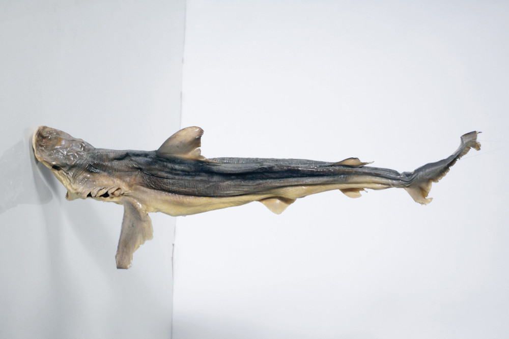 Untitled,-dried-shark-1--2010-web